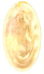 Causal Body